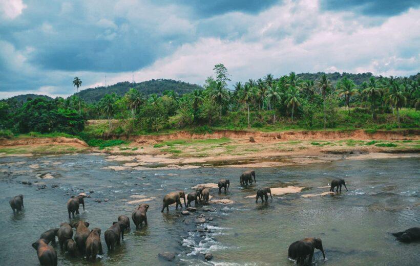 Слоны + Канди + Дамбулла + Сигирия (2 дня)