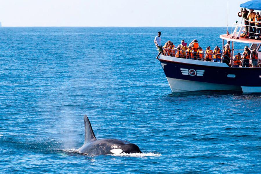 Голубые киты