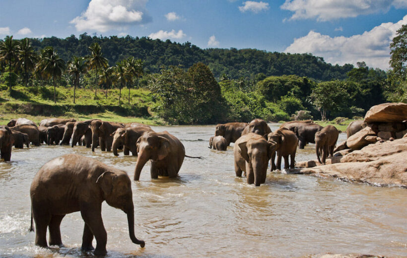 Питомник слонов + эко-деревня Сарадиэля или храм Неллигала или монастырь Махамевнава